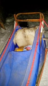Dog-Sled-for-kids-Maa-Of-All-Blogs-On-Travel