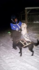 Dog-Sled-Husky-Maa-Of-All-Blogs-On-Travel
