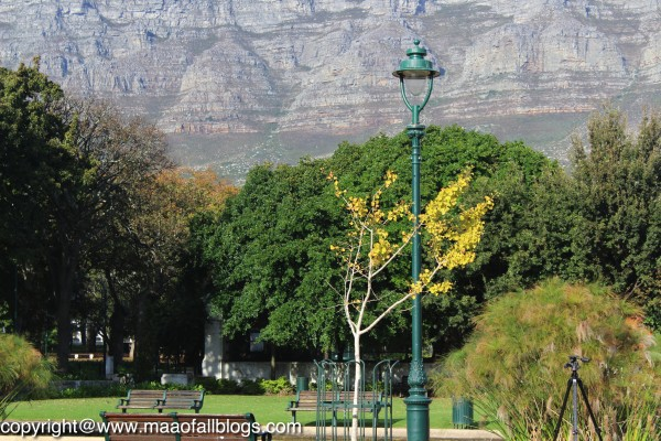Company Gardens with the Table Mountain in the backdrop